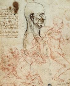 Leonardo, tronco d'uomo di profilo