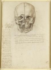 Leonardo, studio