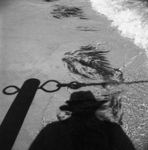 Maier Shadow